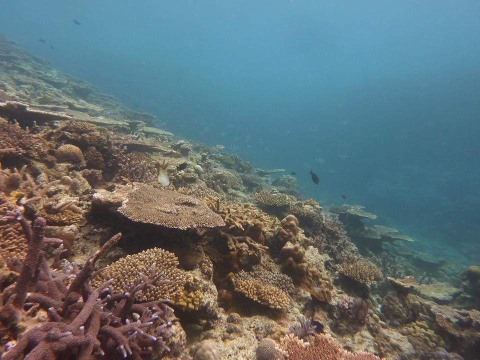 糸満ダイビング協会から水中クリーンアップ参加者募集のご案内