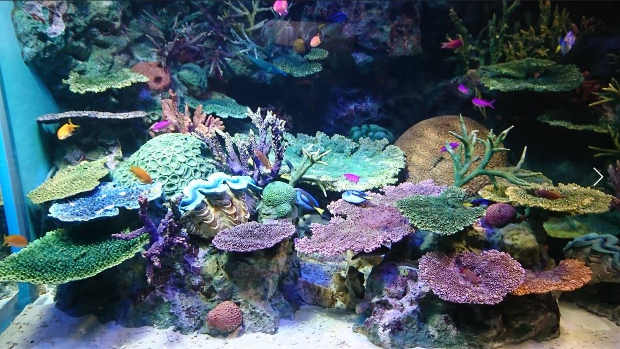 国際サンゴ礁年2018オフィシャルサポーターミーティング開催報告
